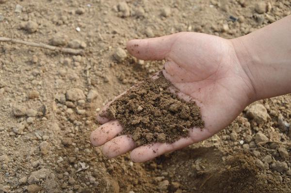 Tipos de Fertilizantes y sus Ventajas