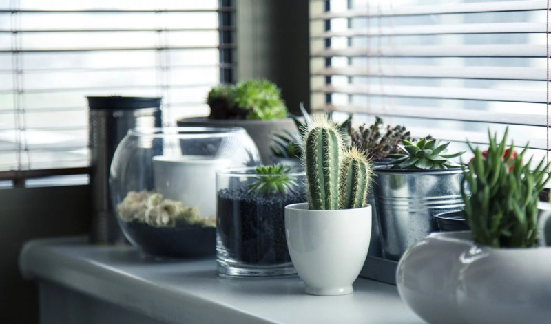4 Tipos de Jardines en Casa u Oficina