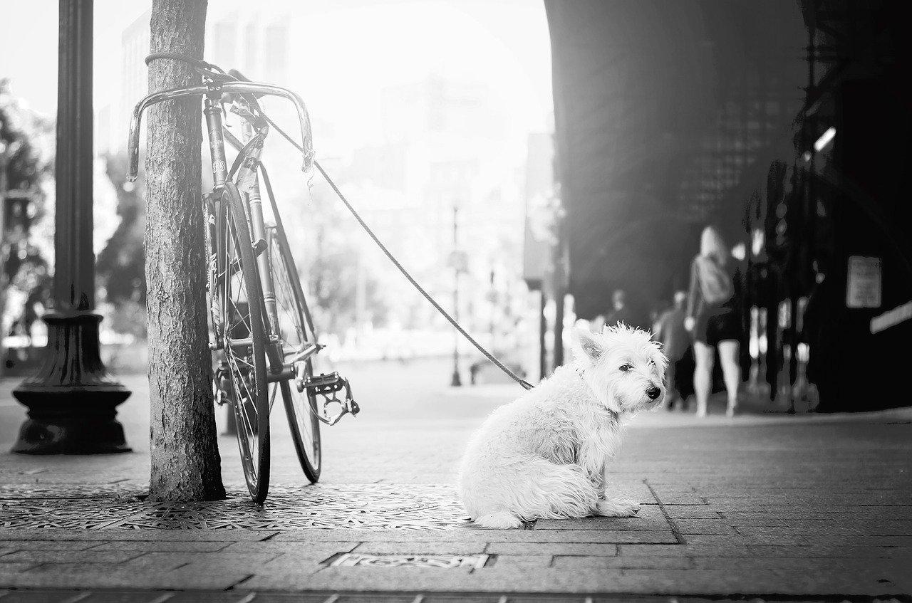 Ventajas de Esterilizar a Nuestro Perro