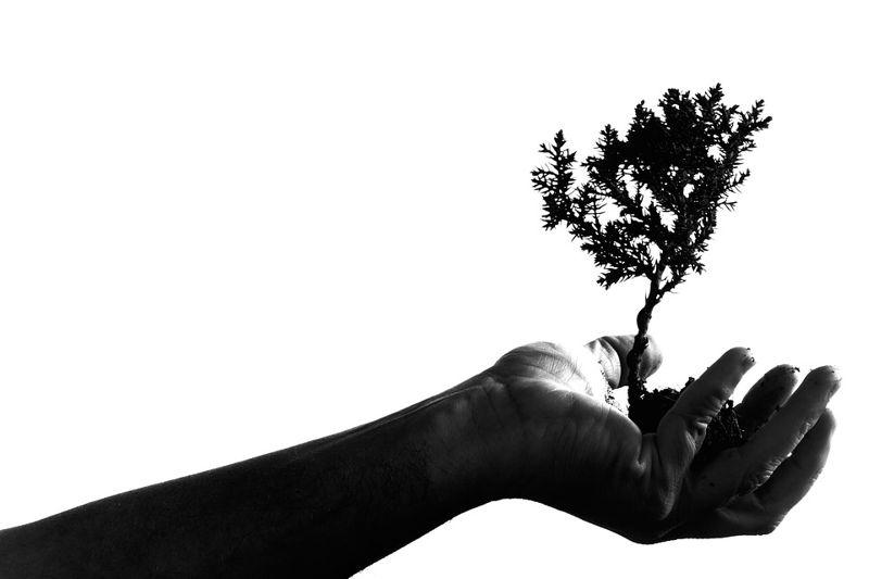 Beneficios de Sembrar o Plantar un Árbol
