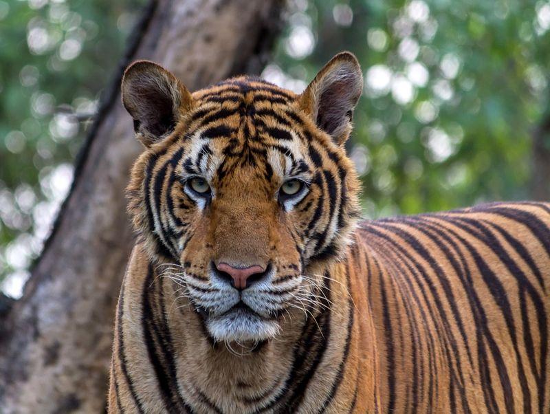Los Zoológicos: Ventajas y Desventajas